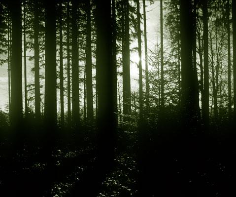 Šuma - Page 2 Wald1